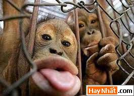 Động vật, Con vật, Thú nuôi, Động vật vui, Voi, Gà, Lợn, Khỉ, Mèo