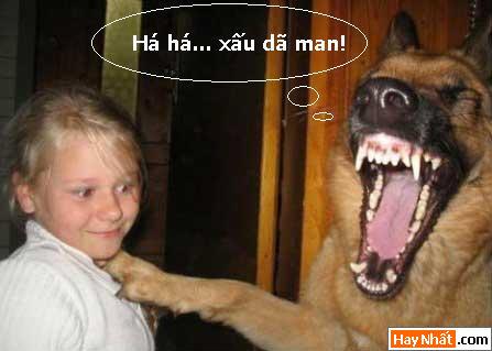 Động vật, Chó, Mèo, Bò, Xe, Sửa xe, Gà, Cún, Khỉ