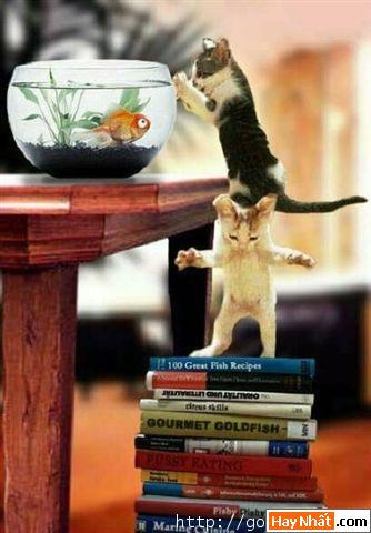 Mèo, Cat, Con mèo, Chú mèo, Động vật, Động vật vui, Hình vui Động vật, Hình vui, Tranh vui, Ảnh vui, Ảnh hài hước, Hình hài hước, Hình vui nhất, Ảnh vui nhất, Tranh vui nhất
