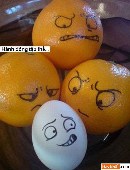 Trứng, Egg, Eggs, Quả trứng, Trứng gà, Trứng vịt, Trứng ngan, Trứng ngỗng, Trứng voi
