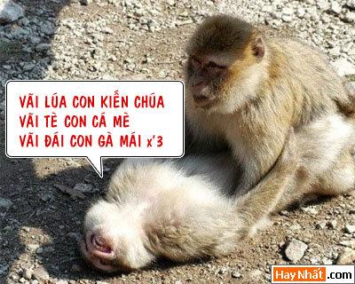 16+, 13+, 18+, Động vật, Chuyện ấy, Khỉ, Gà, Bò, Chó, Nhím, Lợn, Heo, Chuột, ếch,  Chuyện ấy, Bình luận vui