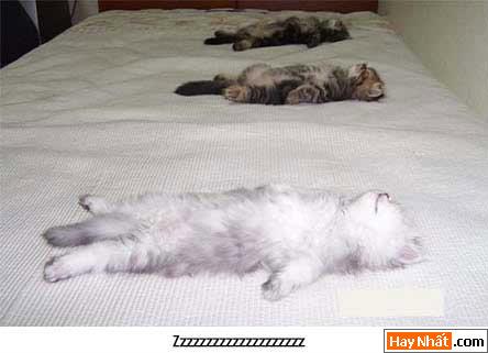 Mèo, Mèo Vui, Hình mèo, Con Mèo, Ảnh vui, Hình Vui