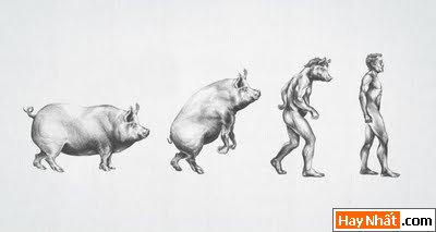 Sự tiến hóa của loài người qua các thời kỳ 2