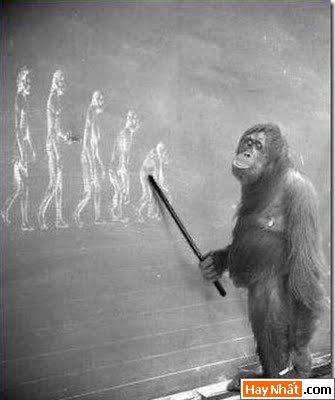 Sự tiến hóa của loài người qua các thời kỳ 6