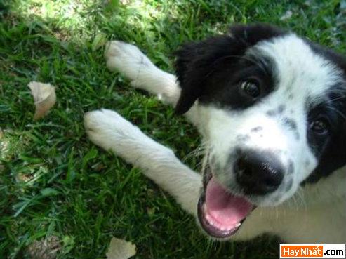 Funny pic,hình vui,ảnh vui,ảnh ngộ nghĩnh,ngộ nghĩnh,ảnh đẹp,chó,động vật