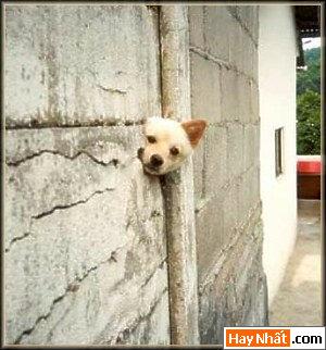 Chó, funny picture, Hình vui, hình vui nhất, Mèo, Vui nhất, Động vật