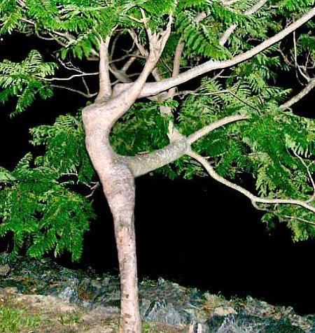 Thiên nhiên cũng sexy 11