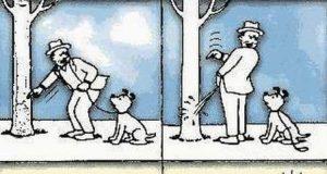 Chó khôn!