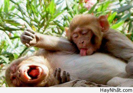 Cười bể bụng với động vật (Part 1) 6