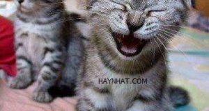 Cười té ghế với thú cưng cute