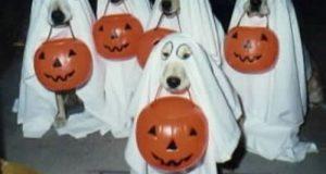 Hình Ảnh Halloween Cực Vui