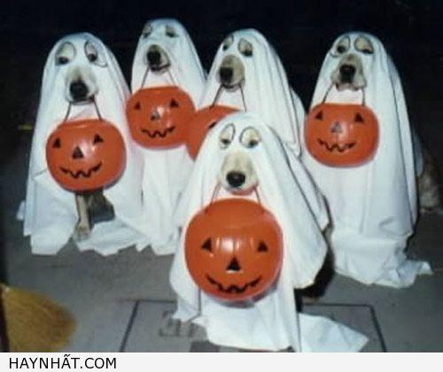 Hình Ảnh Halloween Cực Vui 7