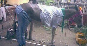Thời trang dành cho.. ngựa!