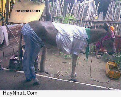 Thời trang dành cho.. ngựa! 1