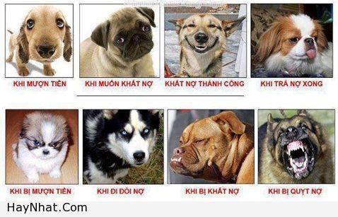 hinh-anh-vui-chuan-khoi-phai-chinh