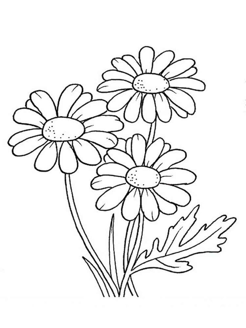 tranh tô màu các loại hoa